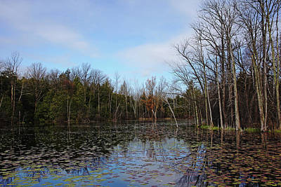 Photograph - Morning Spring Pond by Debbie Oppermann
