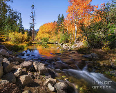 Photograph - Morning Stream by Anthony Bonafede