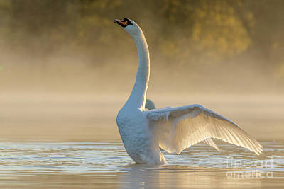 Photograph - Morning Stretch by Paul Farnfield