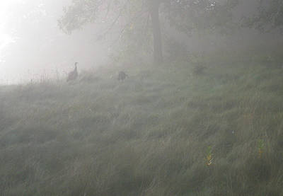 Photograph - Morning Stroll by Bernard Lynch