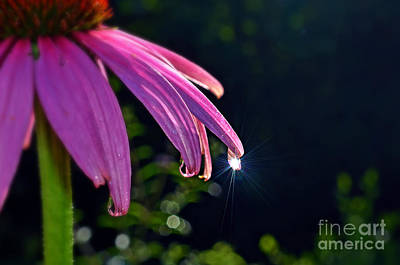 Photograph - Morning Sun In A Dewdrop by Lila Fisher-Wenzel