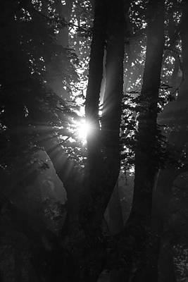 Digital Art - Morning  Sun In Misty Wood by Tommytechno Sweden