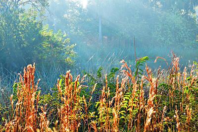 Cat Photograph - Morning Sun Lake Ida by Ken Figurski