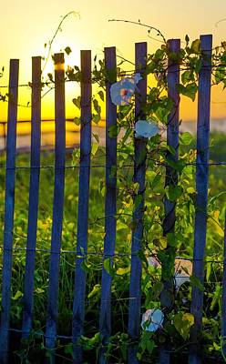 Photograph - Morning Sun by Mary Hahn Ward