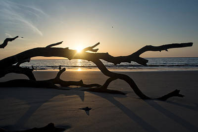 Photograph - Morning Sun Over Driftwood by Chrystal Mimbs