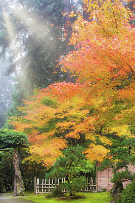 Wall Art - Photograph - Morning Sun Rays On Japanese Maple Trees In Fall by David Gn