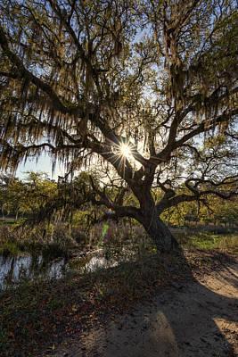 Photograph - Morning Sun Through The Oak by Rick Berk