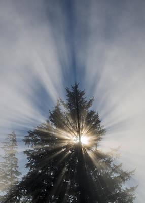 Photograph - Morning Sunburst by Robert Potts