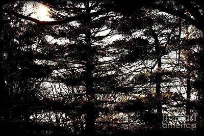 Frank J Casella Royalty-Free and Rights-Managed Images - Morning Sunlight Through The Pines by Frank J Casella