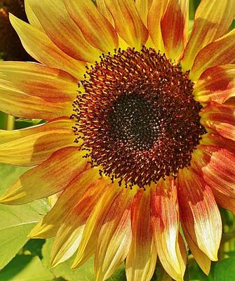 Photograph - Morning Sunshine by Bruce Bley