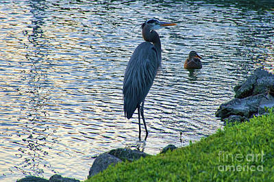 Photograph - Morning Swim by Diana Mary Sharpton