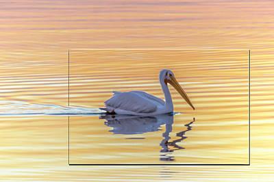 Photograph - Morning Swim by Leticia Latocki