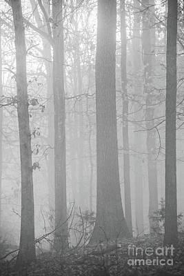 Photograph - Morning Thru The Fog by Nicki McManus