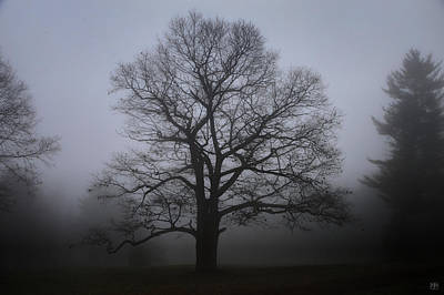 Photograph - Morning Tree by John Meader