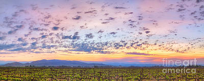 Photograph - Morning Vineyard by Anthony Bonafede