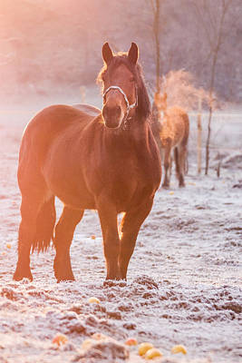 Animals Royalty-Free and Rights-Managed Images - Morning walk by Davorin Mance