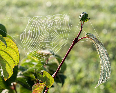 Photograph - Morning Web #1 by Marc Champagne