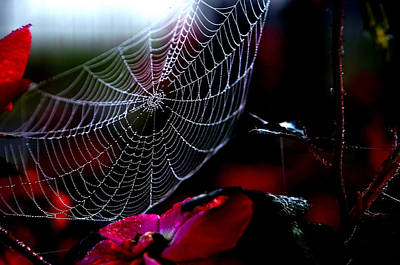 Photograph - Morning Web by Charles Bacon Jr