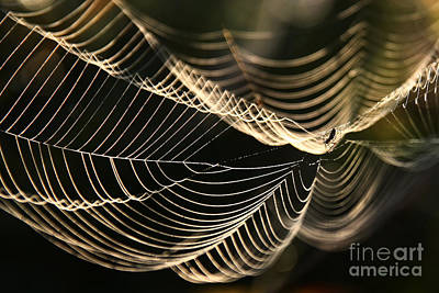 Photograph - Morning Web by Jan Piller