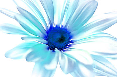 Blue Flowers Photograph - Morning Whisper by Krissy Katsimbras