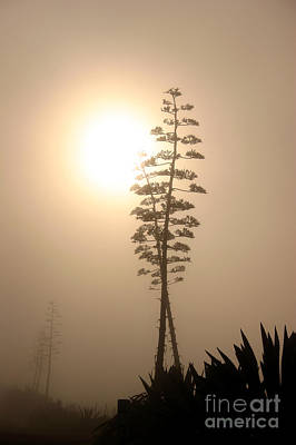 Photograph - Morning Yucca by Balanced Art
