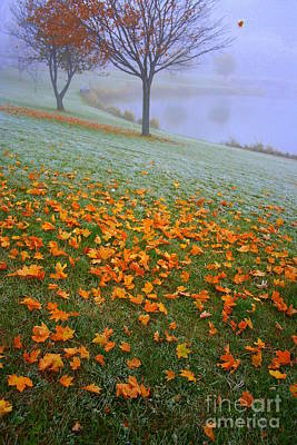 Julia Lueders Photograph - Mornings Carpet by Julie Lueders