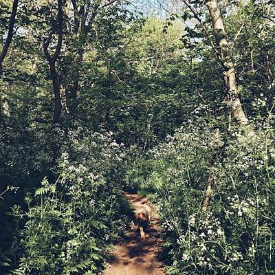 Warwickshire Photograph - #morningwalk #dogwalk #cockapoo #woods by Emma Gillett