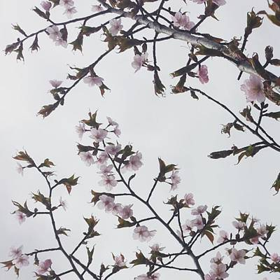 Photograph - #morningwalk #flowers #spring by Tricia Elliott