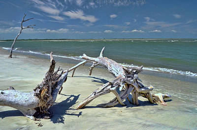 Photograph - Morris Island Driftwood by Allen Beatty