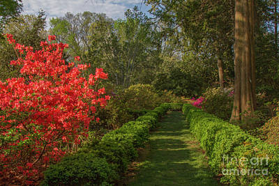 Photograph - Morrison Garden 1 by Chris Scroggins