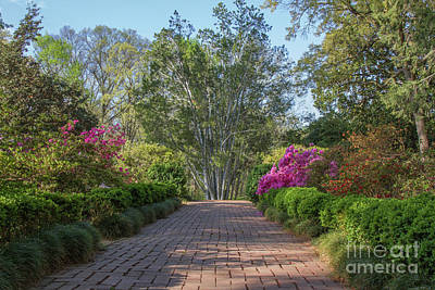 Photograph - Morrison Garden 3 by Chris Scroggins