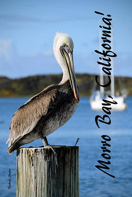 Brown Pelican Painting - Morro Bay Pelican On A Post by Barbara Snyder