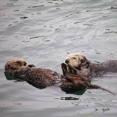 Morro Bay Sea Otters Print by Art Block Collections