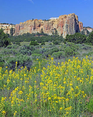 Photograph - D14466-morro Rock And Wildflowers  by Ed  Cooper Photography
