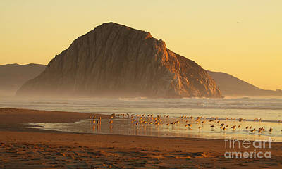 Photograph - Morro Rock At Sunset by Max Allen