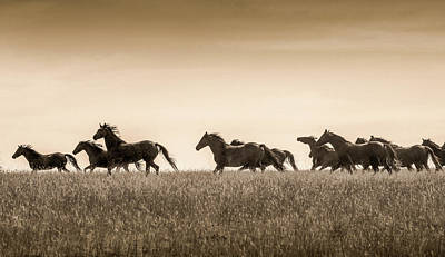 Photograph - Mortana Morgan Mares by Heidi Osgood-Metcalf