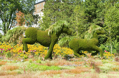 Gatineau Park Photograph - Mosaicanada 150 Display Of Horses 2 by Bob Corson