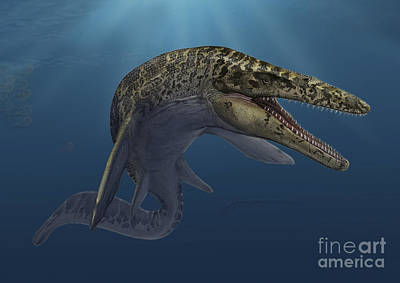 Prehistoric Era Digital Art - Mosasaurus Hoffmanni Swimming by Sergey Krasovskiy