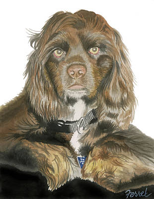 Cocker Spaniel Painting - Mose - Cocker Spaniel by Ferrel Cordle