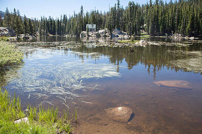 Photograph - Mosquito Lake by Peter Dyke