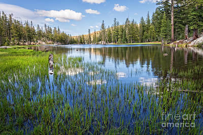 Mosquito Lake Reflections 2 Art Print by Dianne Phelps