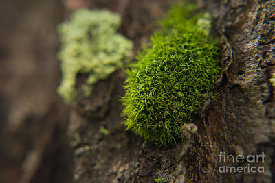 White Photograph - Moss 1 by Pittsburgh Photo Company