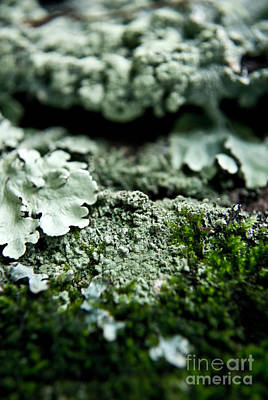 Moss Photograph - Moss 4 by Pittsburgh Photo Company