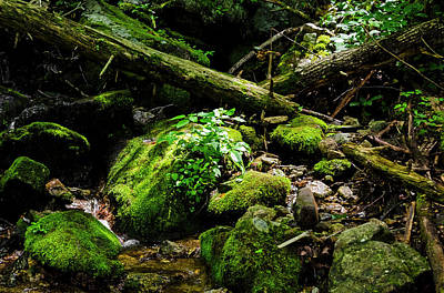 Photograph - Moss At Wigwam Falls by Greg Reed
