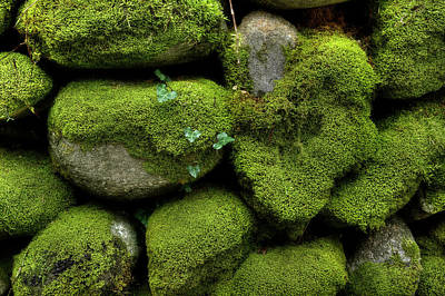 Art Print featuring the photograph Moss And Ivy by Mike Eingle