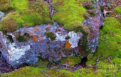 Photograph - Moss And Lichen by Michele Penner