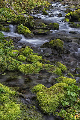 Photograph - Moss And Rock In Creek Co Dsc06697 by Greg Kluempers