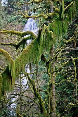 Photograph - Moss At Munson Creek by Albert Seger