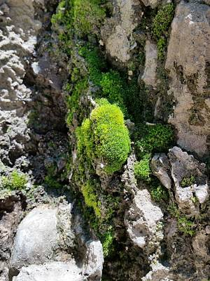 Photograph - Moss Beds by Zac AlleyWalker Lowing