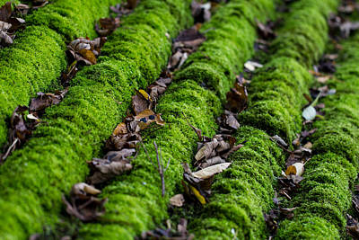 Photograph - Moss by Clare Bambers